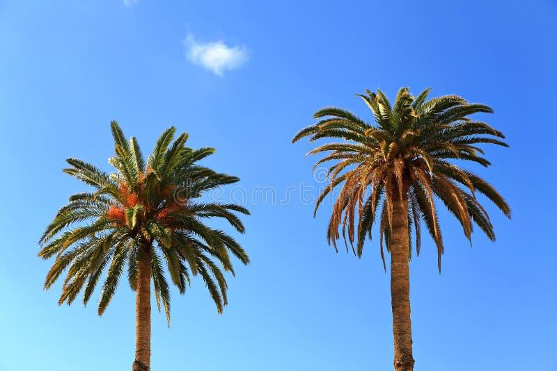 阿加埃特是在加那利群岛上的一个自治市 免版税图库摄影