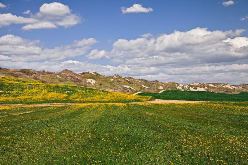 阿夏诺,锡耶纳,托斯卡纳,意大利:风景小山在C区域  免版税库存图片