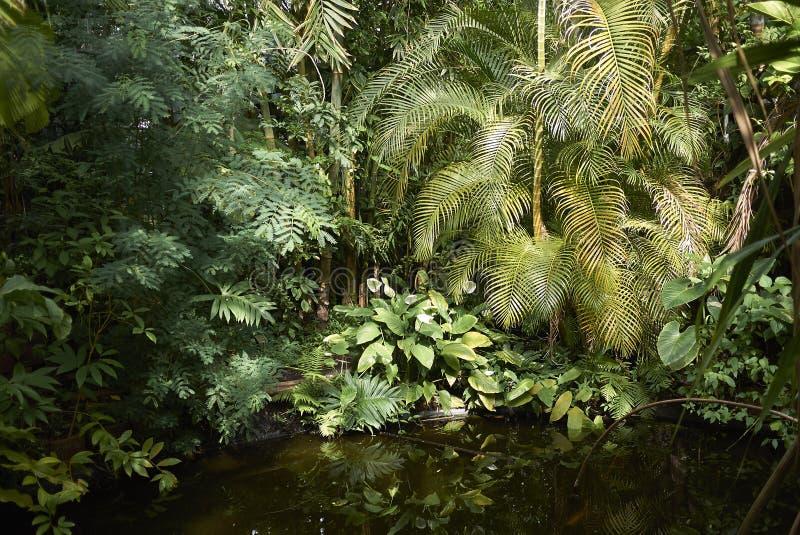 阿姆斯特丹植物园 库存照片