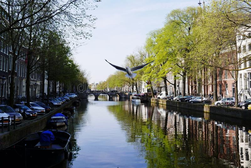 阿姆斯特丹运河 库存图片