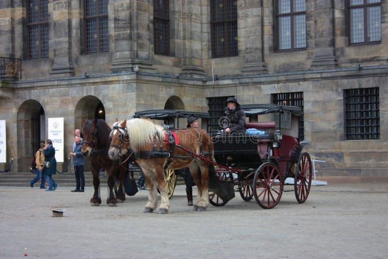 阿姆斯特丹,国际旅游目的地 两匹马拉扯支架,并且马车夫与他偶然遇见的朋友聊天 库存图片