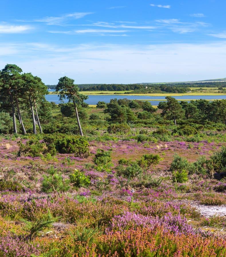 阿尔内欧石南丛生的荒野,多西特有横跨港口的看法到海岛 库存照片