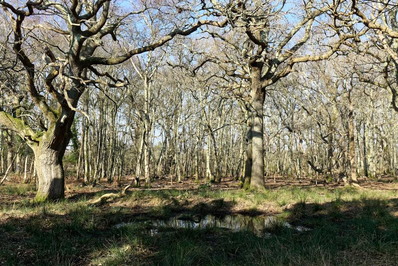 阿尔内的森林 免版税库存照片