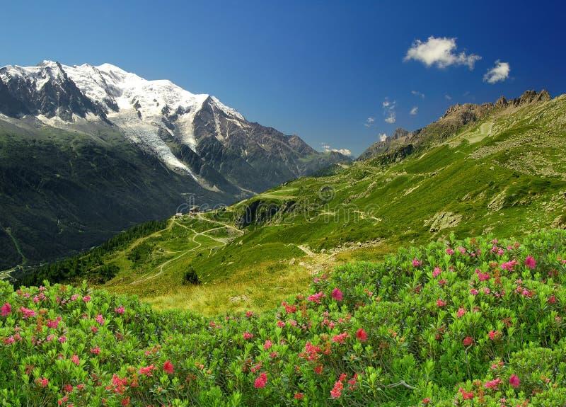 阿尔卑斯开胃菜 库存照片