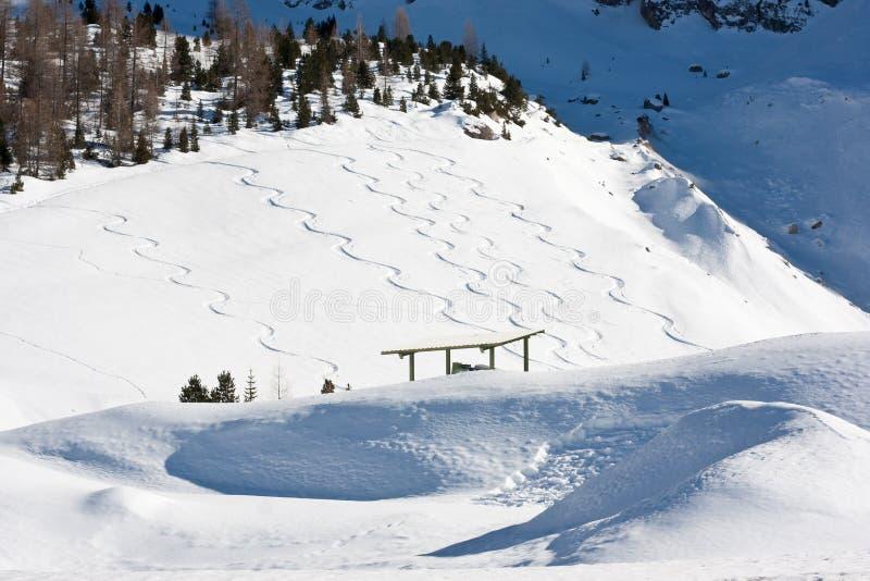 阿尔卑斯森林横向雪板跟踪 库存照片