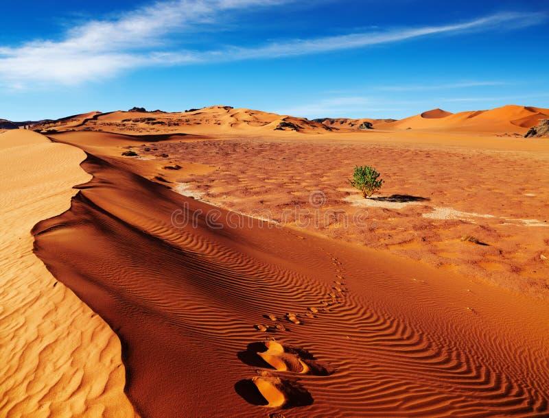 阿尔及利亚沙漠撒哈拉大沙漠 免版税库存图片