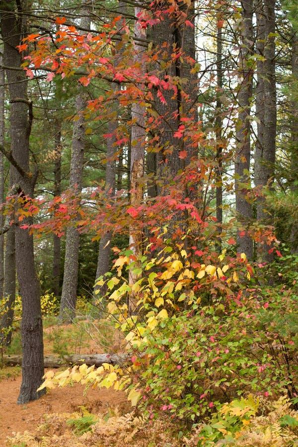 阿尔根金族五颜六色的公园结构树 免版税库存照片