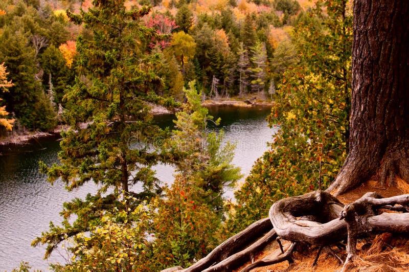 秋天的阿尔根金族公园 免版税库存图片