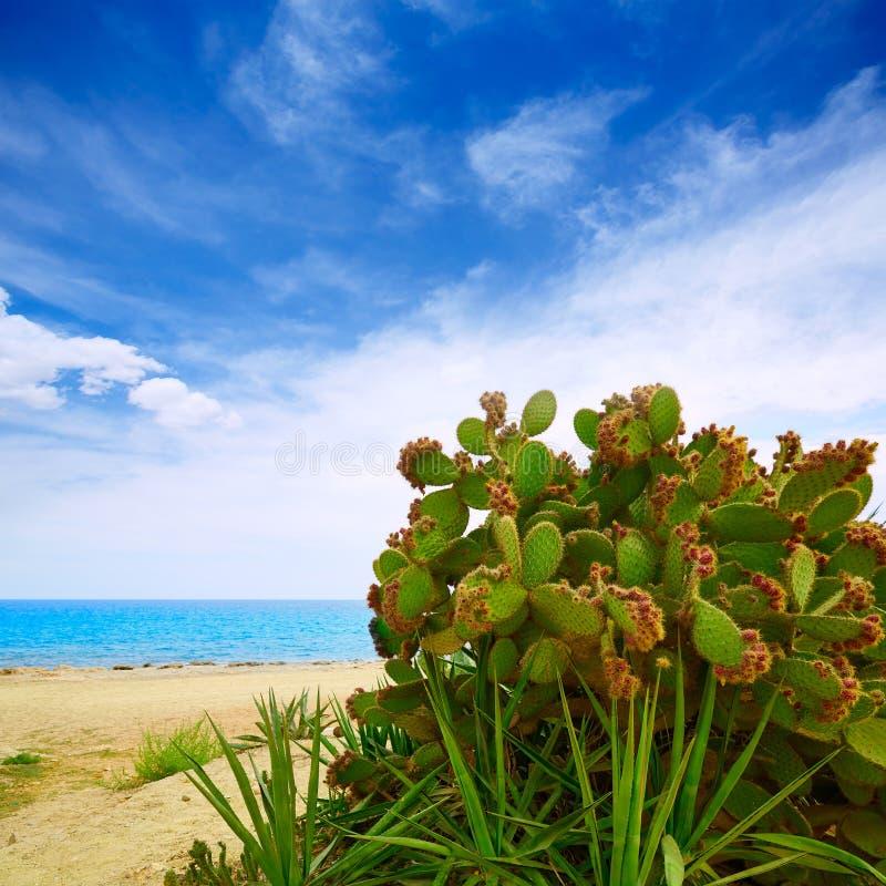阿尔梅里雅Mojacar海滩地中海西班牙 库存图片