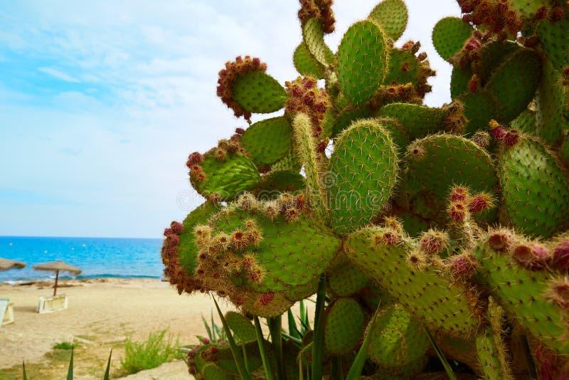 阿尔梅里雅Mojacar海滩地中海西班牙 免版税图库摄影