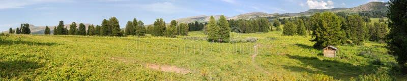 阿尔泰边疆区山上面的美好的夏天全景  免版税库存照片