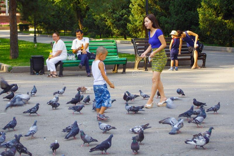 阿尔玛蒂,哈萨克斯坦- 2017年7月27日:未知的人民哺养的鸽子在28 Panfilov城市公园 库存照片