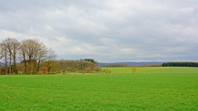 阿尔登风景,豪华的绿色领域,与树和森林在一有薄雾的多云天 库存图片