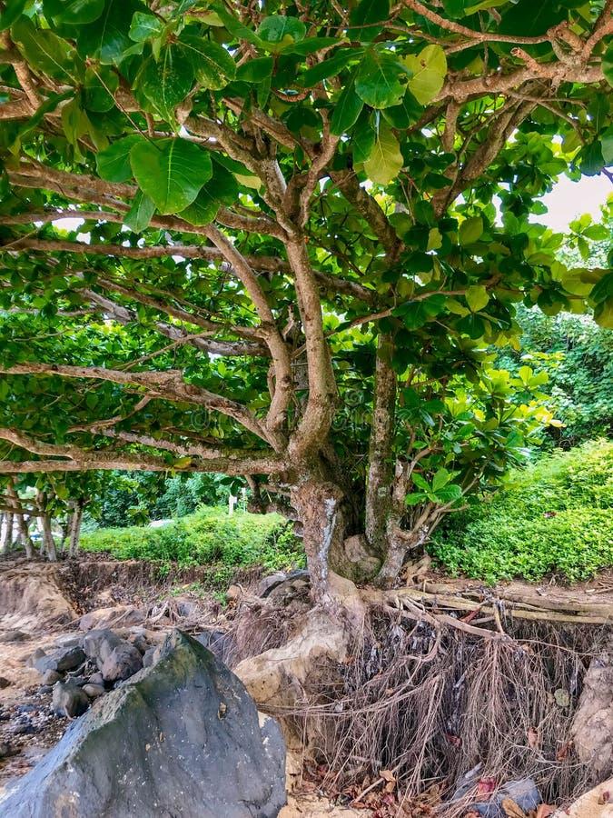 阿尼尼海滩,考艾岛,夏威夷,美国 库存图片