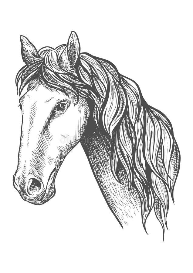阿帕卢萨马品种剪影标志赛马  库存例证