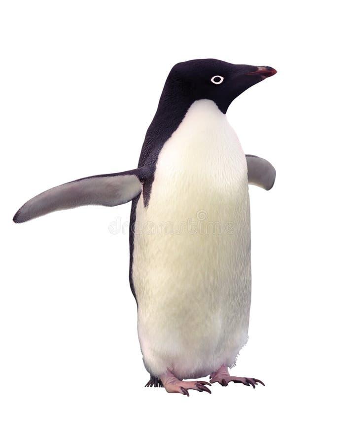 阿德力企鹅剪报查出的路径企鹅 免版税库存图片