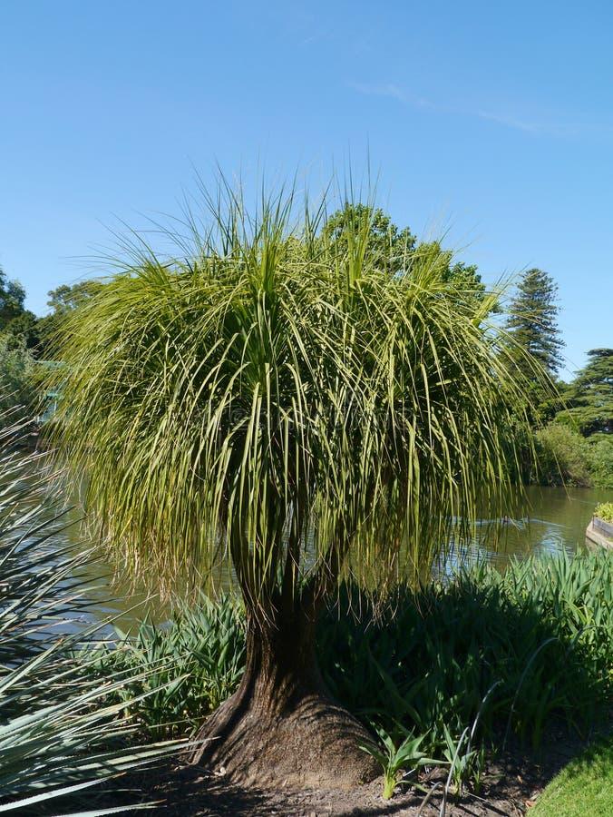 阿德莱德植物园在澳大利亚 免版税库存照片