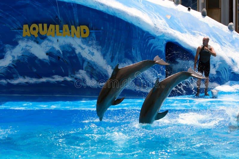 阿德赫aqualand肋前缘海豚显示tenerife 免版税图库摄影