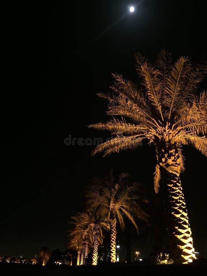 阿拉伯之夜 图库摄影