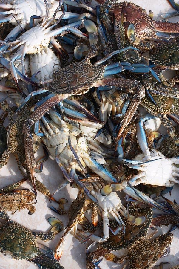 Download 阿拉伯人活螃蟹的海湾 库存图片. 图片 包括有 捕鱼, 抓住, 新鲜, 贝类, 鱼贩子, 甲壳动物, 卡塔尔, 螃蟹 - 65547
