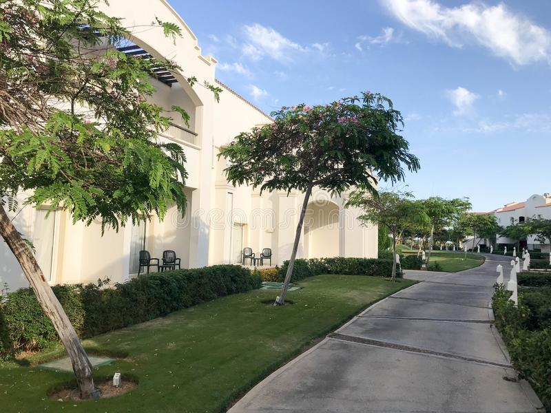 阿拉伯回教白色石大厦、村庄、房子树的热带绿叶背景的与叶子和植物 免版税库存照片