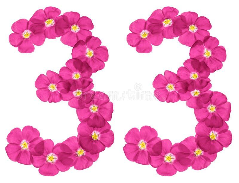 阿拉伯数字33,三十三,从胡麻桃红色花,隔绝在白色背景 皇族释放例证