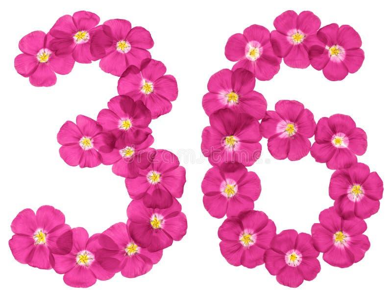 阿拉伯数字36,三十六,从胡麻桃红色花,隔绝在白色背景 库存例证