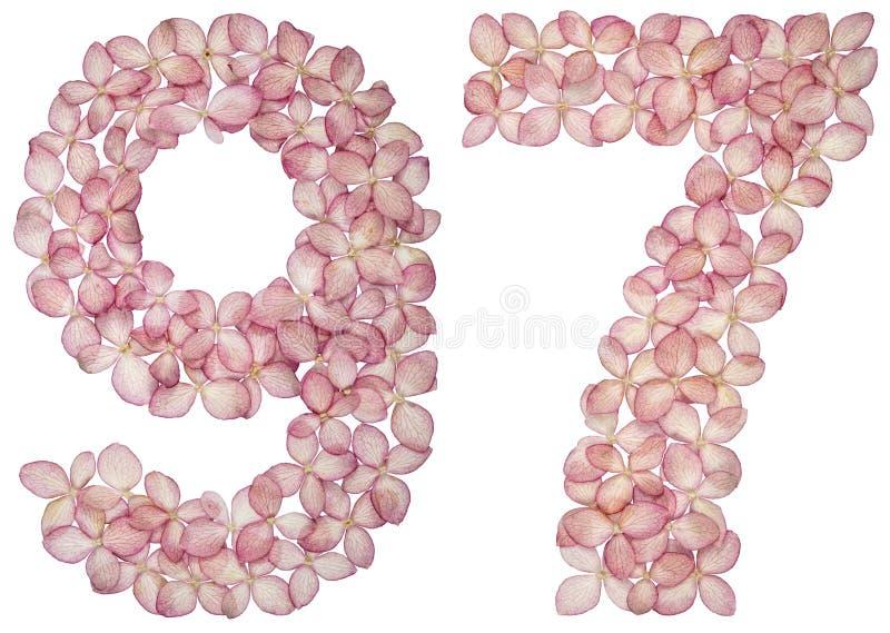 阿拉伯数字97,九十七,从八仙花属花,隔绝在白色背景 库存例证