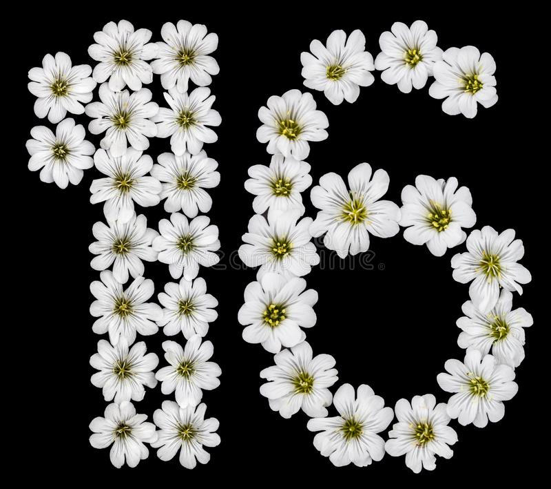 阿拉伯数字16,十六,一个,六,从Cera白花  库存例证