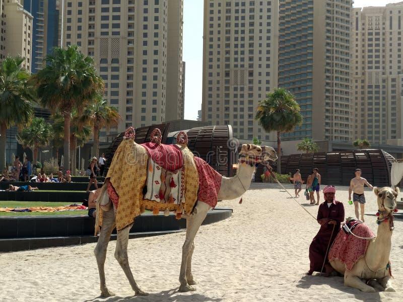 阿拉伯联合酋长国迪拜 库存图片