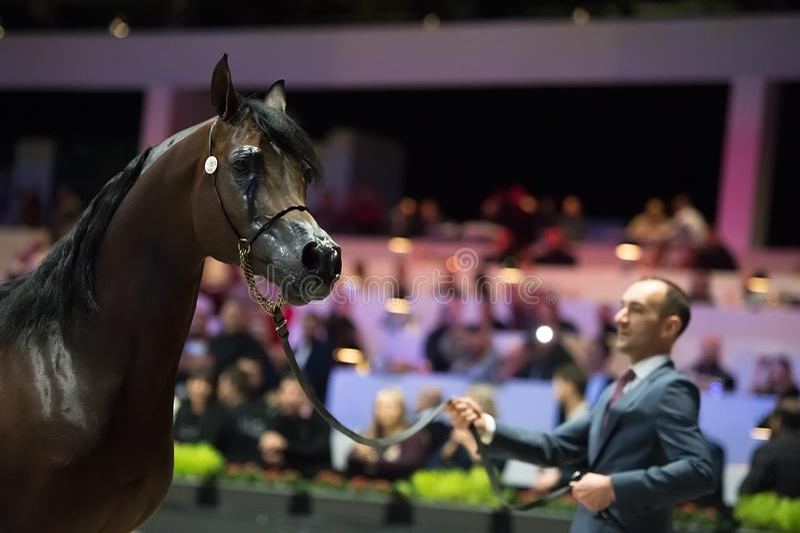 阿拉伯马世界冠军, Nord Villepente在巴黎 Pari 库存照片