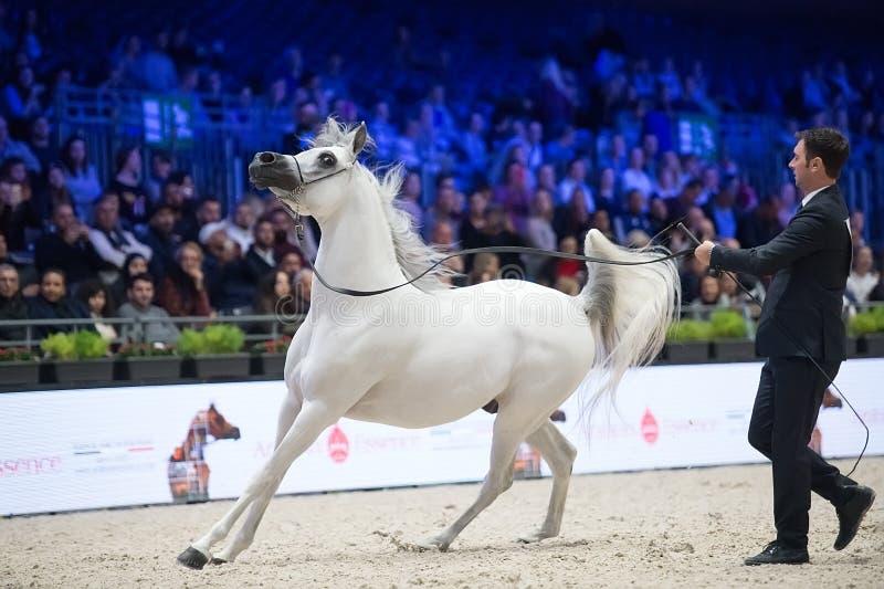 阿拉伯马世界冠军, Parc des博览会Villepint 库存图片
