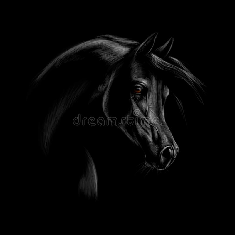 阿拉伯马头的画象在黑背景的 库存例证