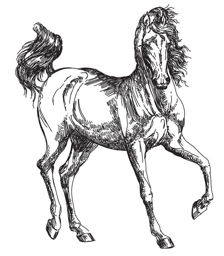 阿拉伯马手图画例证 皇族释放例证