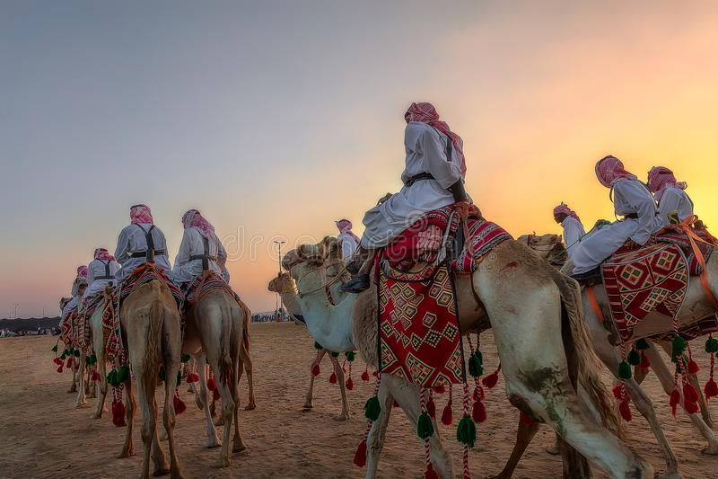 阿拉伯骆驼乘驾在沙特阿拉伯 库存照片