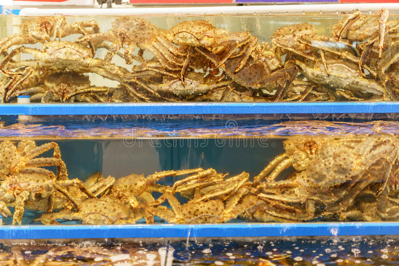 阿拉斯加巨蟹在池塘 免版税图库摄影