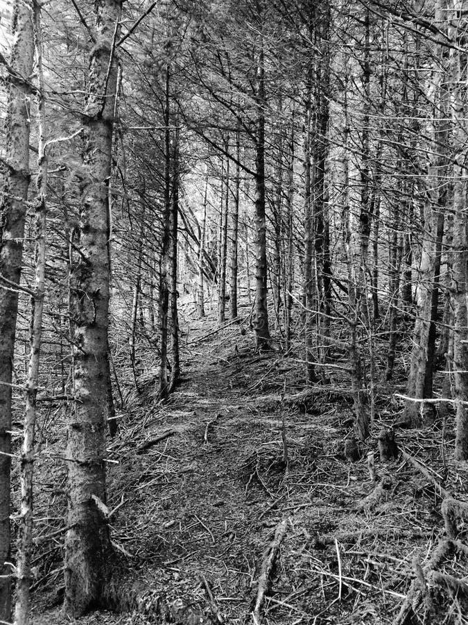 阿拉斯加森林B&W 免版税库存照片