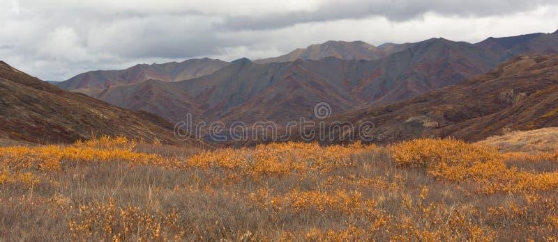 阿拉斯加的乡下 免版税库存图片
