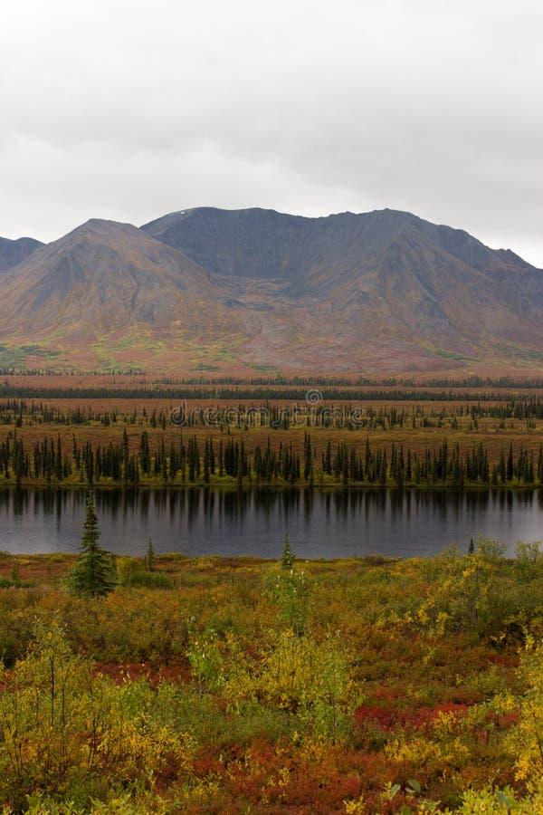 阿拉斯加的原野看法秋天颜色的 图库摄影