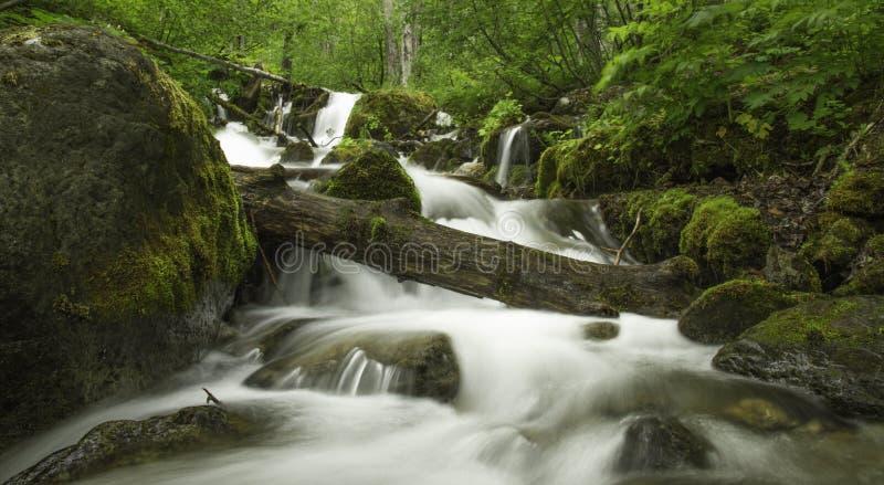 阿拉斯加的夏天小河 免版税库存照片