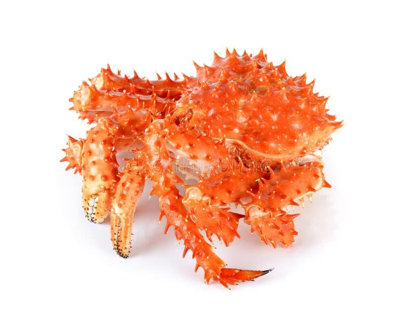 阿拉斯加的巨蟹在被隔绝的白色背景中 免版税库存图片