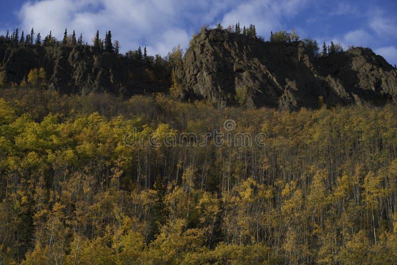 阿拉斯加的桦树秋天颜色 库存图片