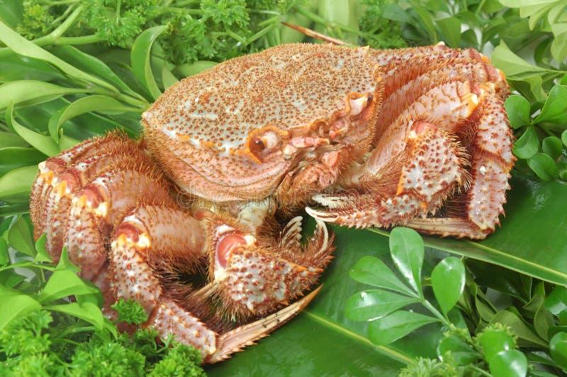 阿拉斯加的螃蟹国王 库存照片