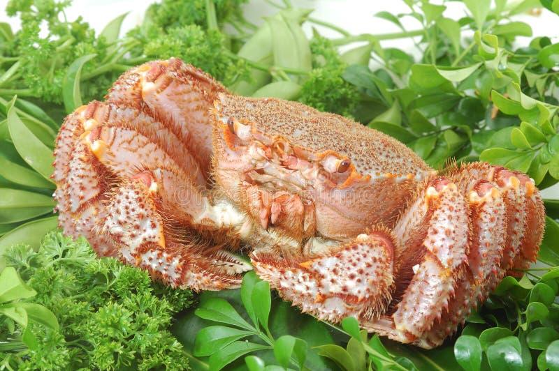 阿拉斯加的螃蟹国王 免版税库存照片