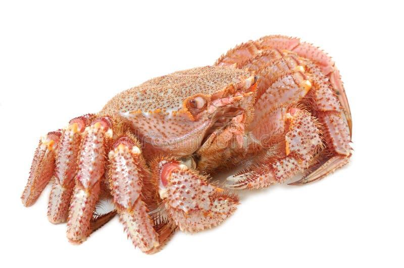 阿拉斯加的螃蟹国王 免版税库存图片