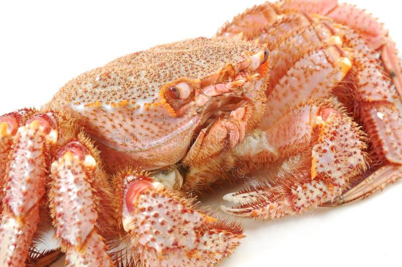 阿拉斯加的运行螃蟹国王 库存图片