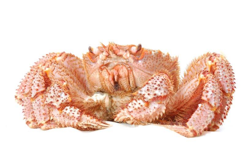 阿拉斯加的运行螃蟹国王 免版税库存图片