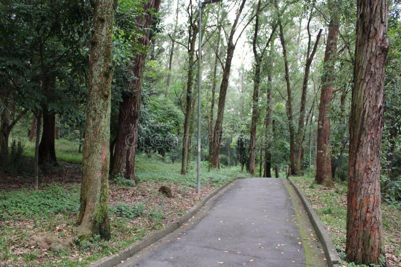 阿拉米达在Aclimação公园São保罗-巴西 库存照片