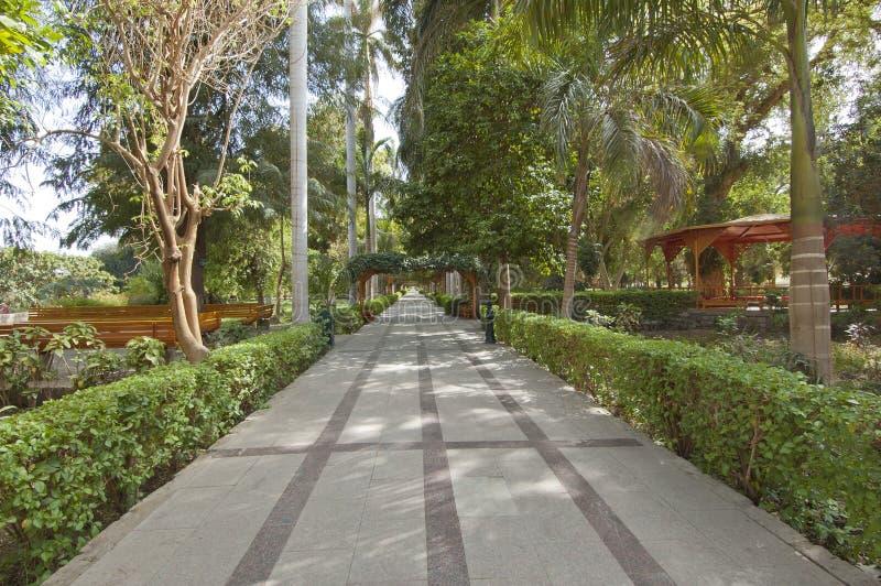 阿斯旺植物的埃及庭院 免版税库存图片