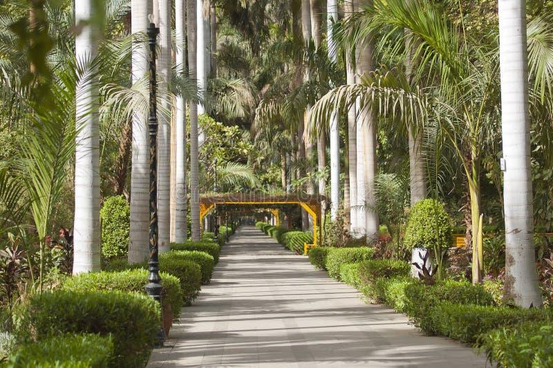阿斯旺植物的埃及庭院 库存图片